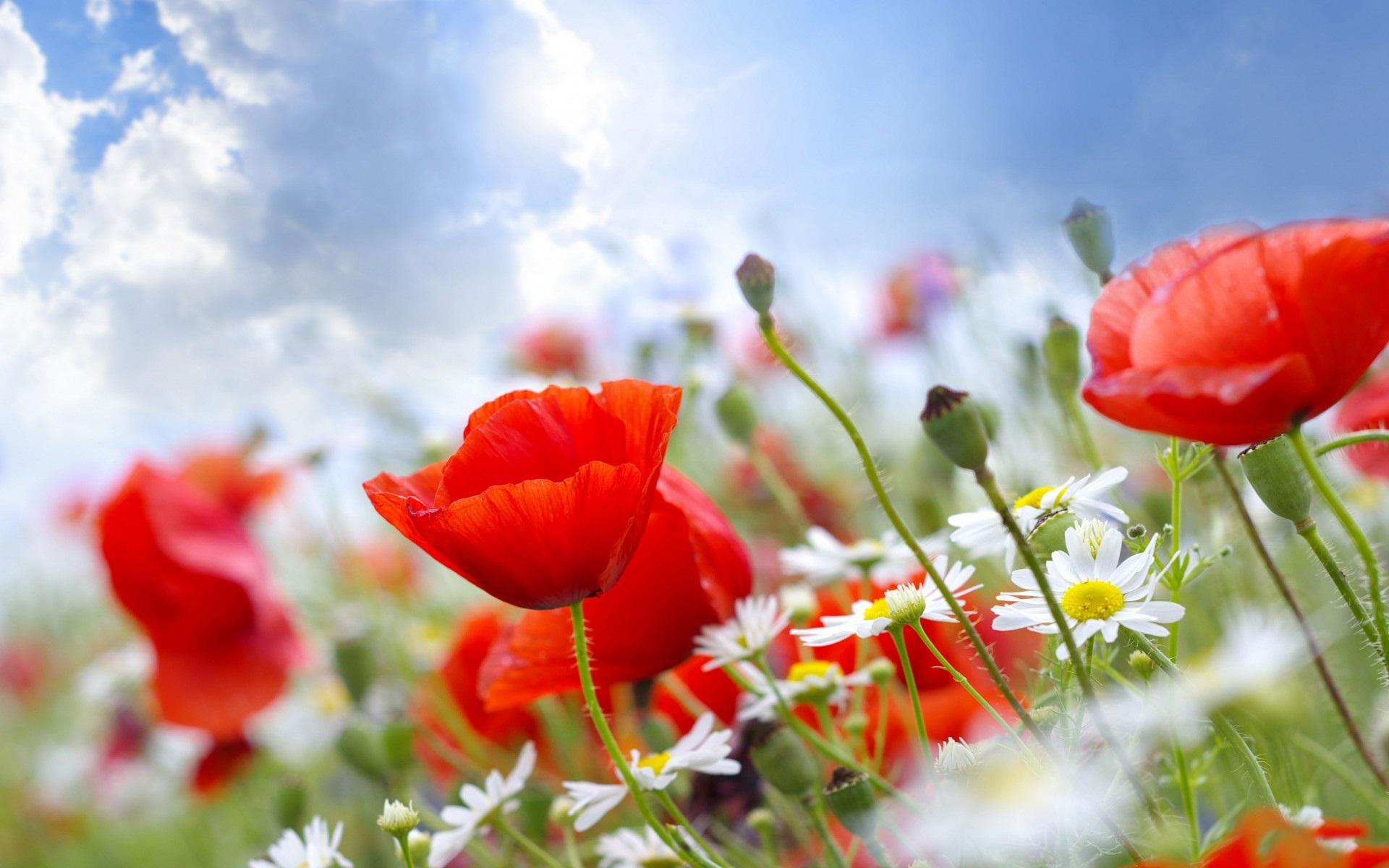 http://centrumrafael.sk/wp-content/uploads/2013/05/Summer-Flowers.jpg